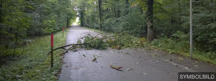Baum über Strasse