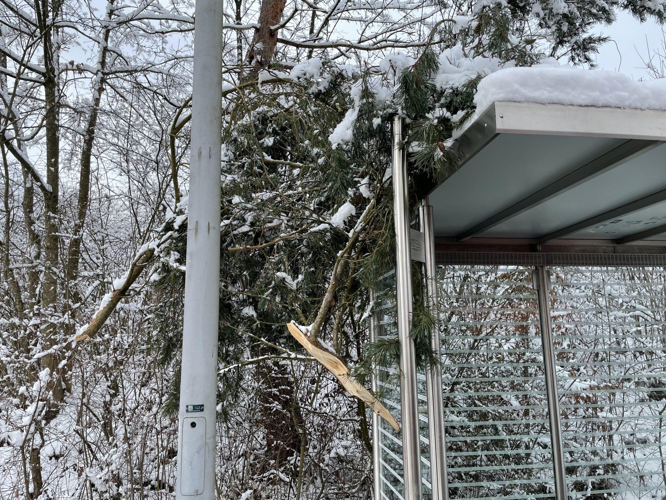 Baum droht auf Strasse zu fallen